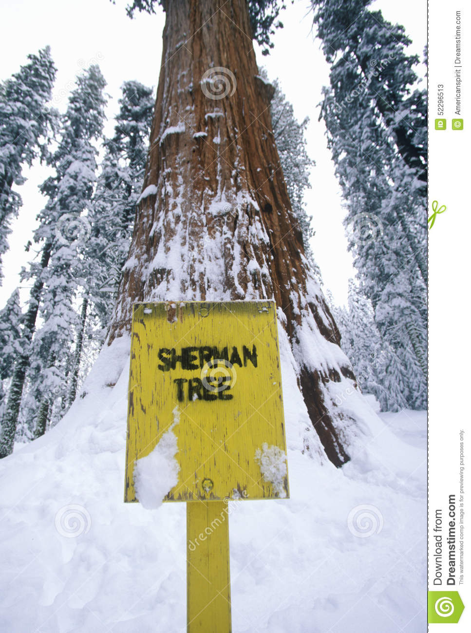 General Sherman Redwood Tree In Winter, Sequoia National Park.
