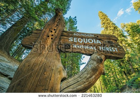 Sequoia National Park Stock Photos, Royalty.
