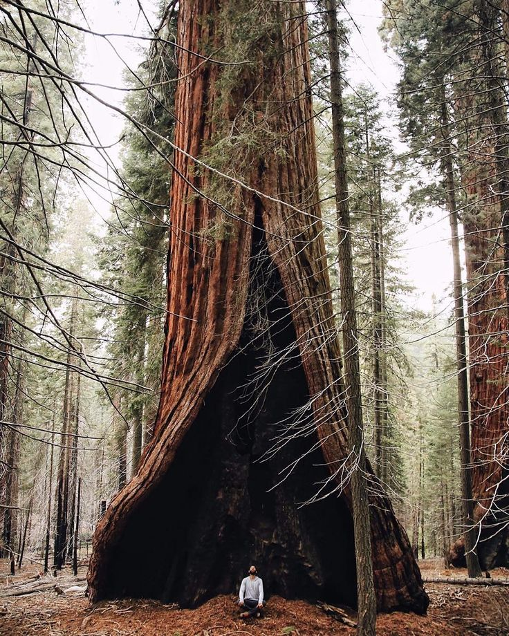 1000+ ideas about Sequoia National Park on Pinterest.