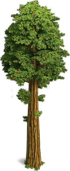 Sequoia png 3 » PNG Image.