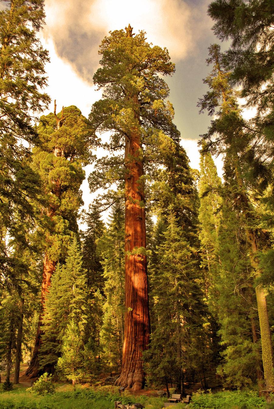 Extreme Trees.