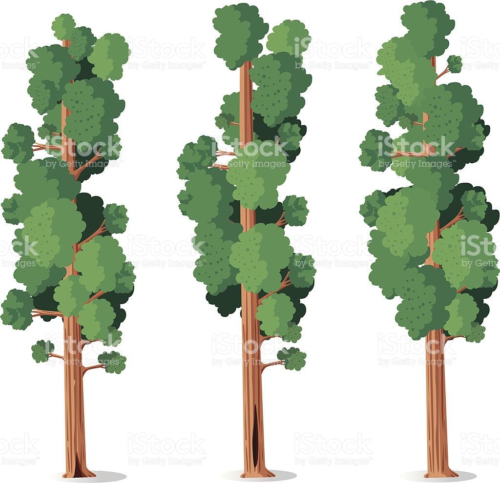 Sequoia Tree Clip Art, Vector Images & Illustrations.
