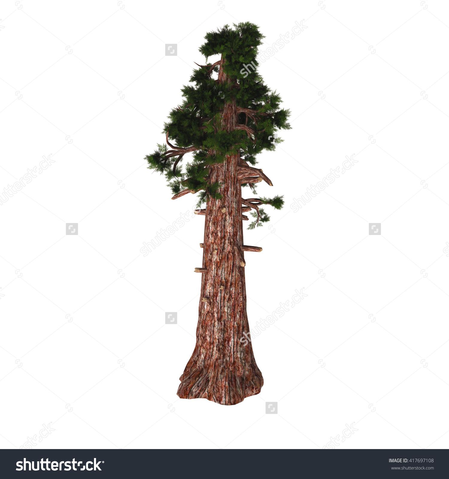 Giant Redwood Tree 3d Illustration Sequoiadendron Stock.