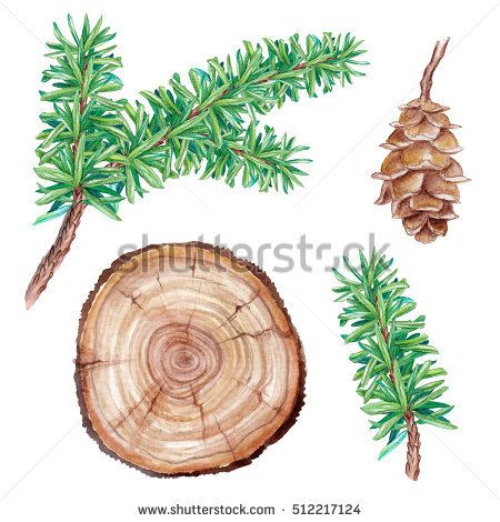 1000+ ideas about Coniferous Trees on Pinterest.
