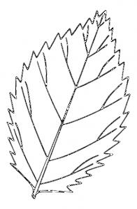 Serrated Leaf Clip Art Download.