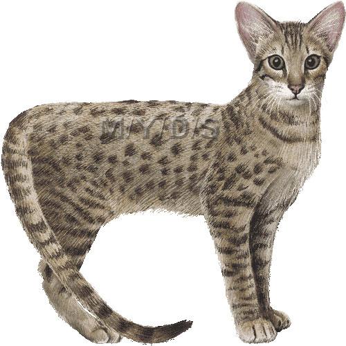 Serengeti Cat clipart graphics (Free clip art.