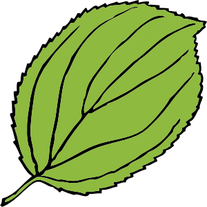 Serrate Leaf clip art Free Vector / 4Vector.