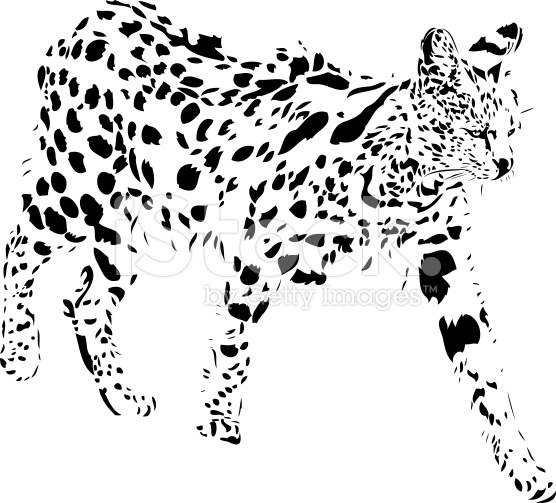 Serval in B&W Royalty Free.