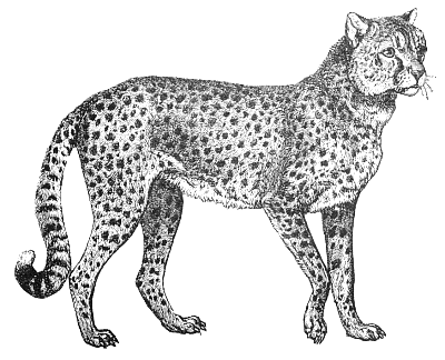 Serval Clipart.