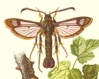Insekten.