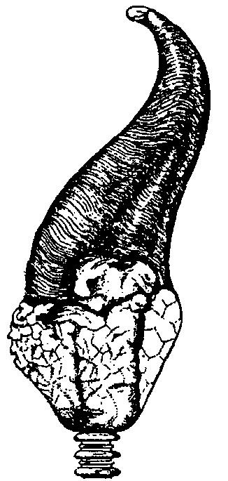 Variety of Life: Neritimorpha.