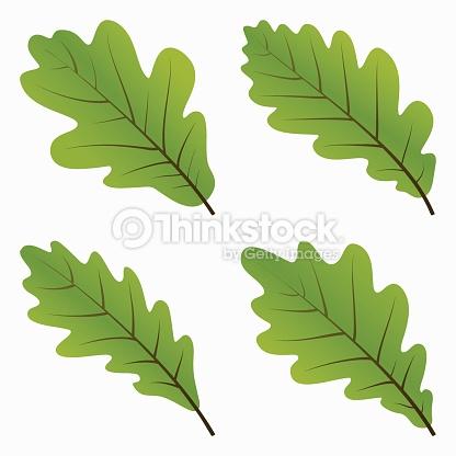 Green Oak Leaves Vector Art.