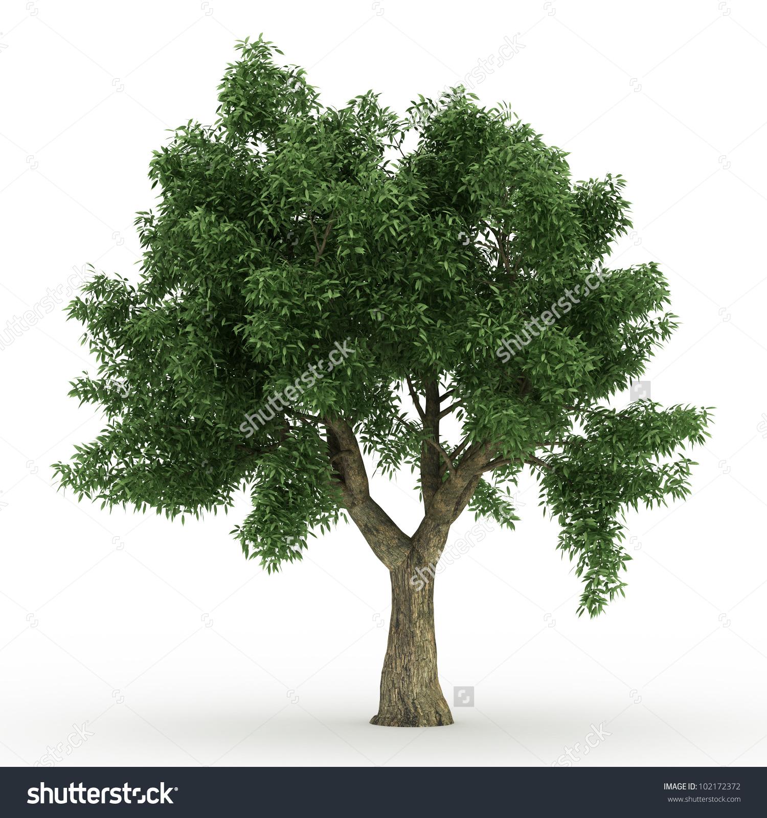 3d Sessile Oak Tree Isolated Over Stock Illustration 102172372.