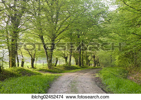 """Stock Photo of """"Track through oak forest of Moladiers towards."""