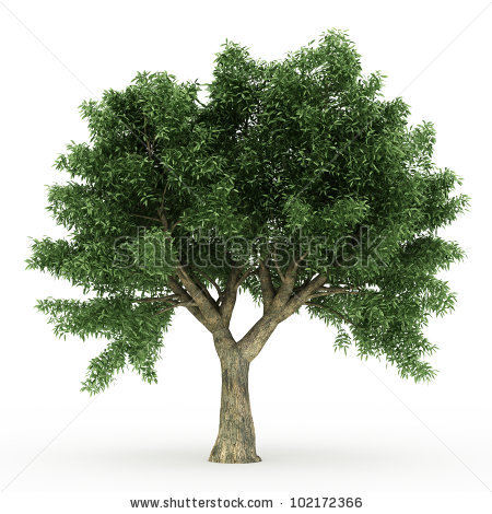 Vector Images, Illustrations and Cliparts: 3d Sessile Oak tree.
