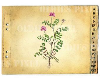 Items similar to Vintage Setaria Viridis Plant Drawing Instant.