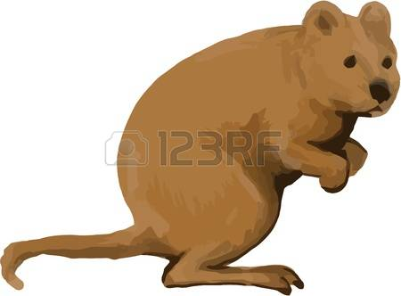 66 Quokka Cliparts, Stock Vector And Royalty Free Quokka Illustrations.