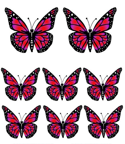 Pictures Of Butterflies.