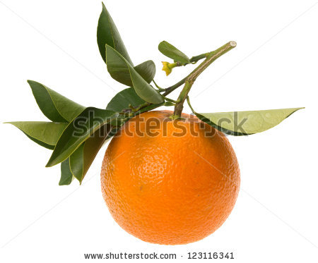 Bitter Orange Stock Photos, Royalty.