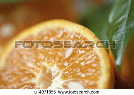 Stock Image of Seville Orange Half u14971055.