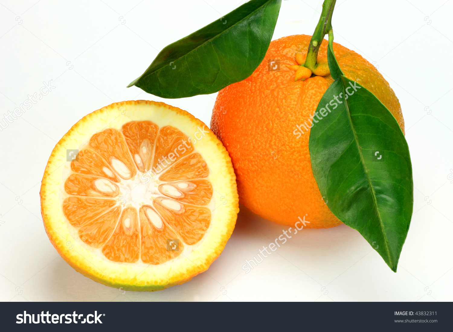 Bitter Orange Stock Photo 43832311.