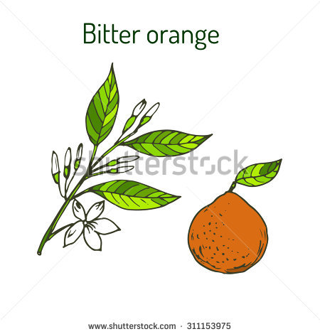 Orange Bitter Stock Photos, Royalty.
