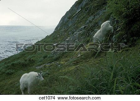 Stock Photo of USA, Alaska, Seward, Kenai Peninsula, Seward.