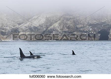 Stock Photography of USA, Alaska, Seward, Resurrection Bay, dorsal.