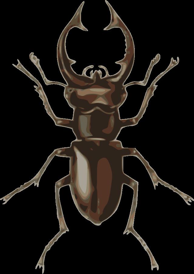 Stag beetle (lucanus elephas) Clipart, vector clip art online.
