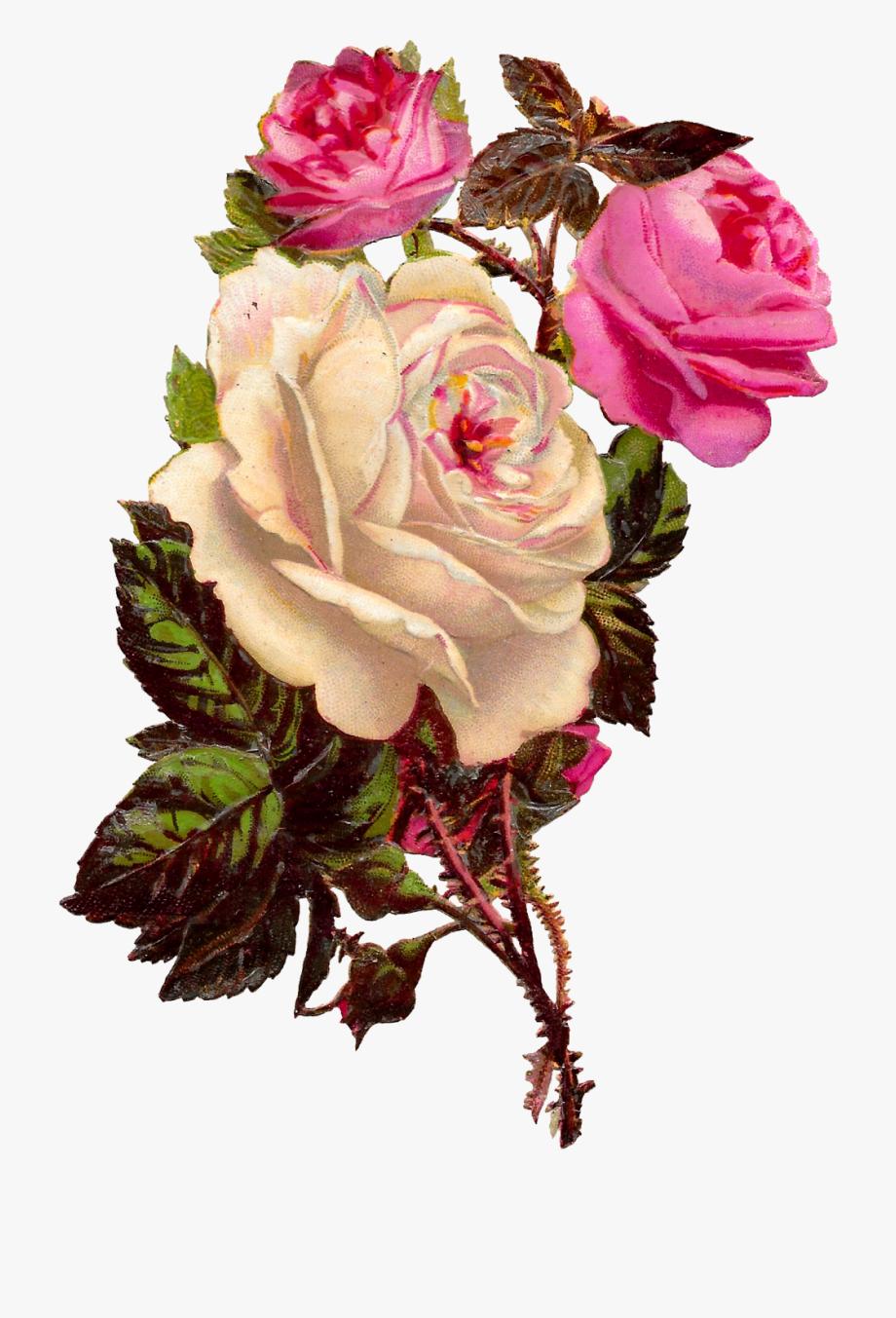 Rose Flower Botanical Art Clipart Shabby Chic Image.