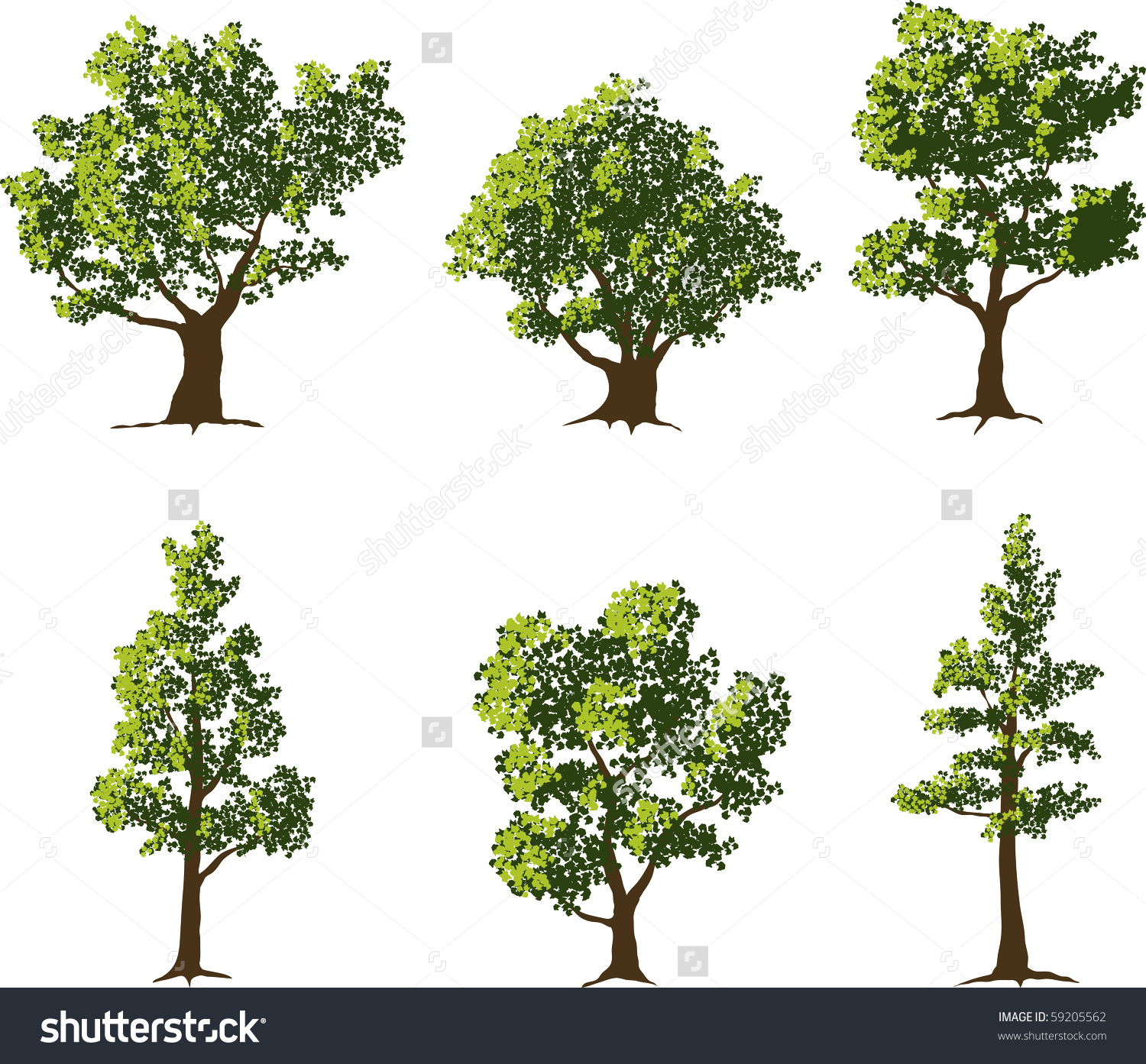 Collection Six Fully Grown Shade Trees Stock Vector 59205562.