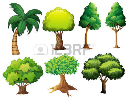 Shade Plants Stock Photos Images, Royalty Free Shade Plants Images.