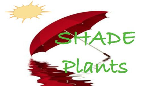 Plant Info: Shade Plants.