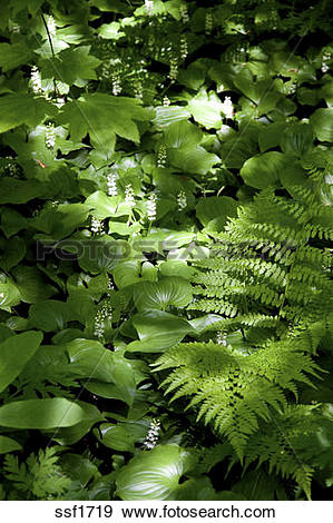 Stock Photograph of A mix of shade loving plants on the forest.
