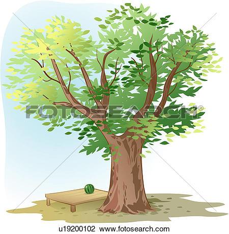 Clipart of shade, tree, watermelon, flat bench, zelkova tree.