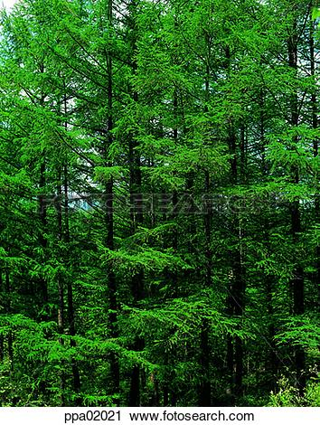 Stock Photography of tree, leafy shade, plants, thick, dense.
