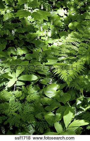 Pictures of The forest floor covered in a wide variety of shade.