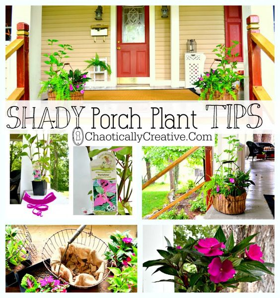 Shade plants clipart - Clipground