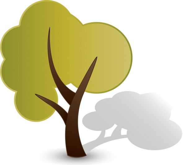 Vector image of a tree and shadow..