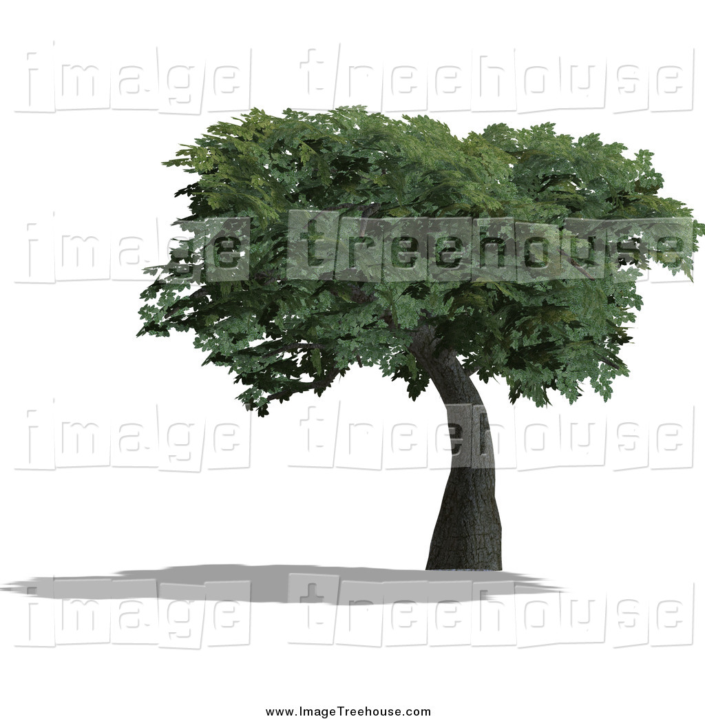 Royalty Free Computer Generated Stock Tree Designs.