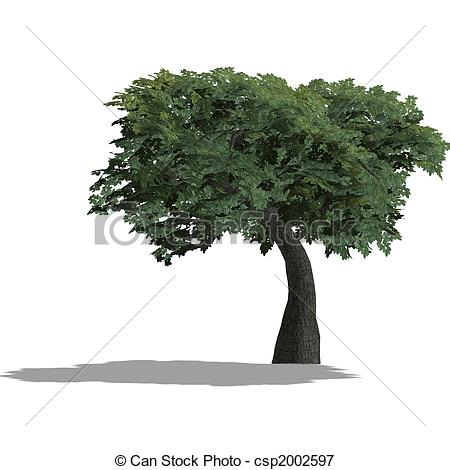 Trees Shadow Clip Art.