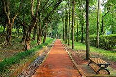 Walk Path Under Green Shady Trees Arch Stock Photo.