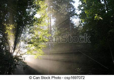 Stock Photo of light shaft through trees.