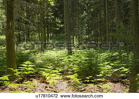Stock Photo of England, Surrey, Coldharbour. Shafts of sunlight.