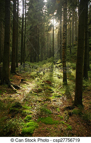 Stock Photography of Tranquil Woodland scene.