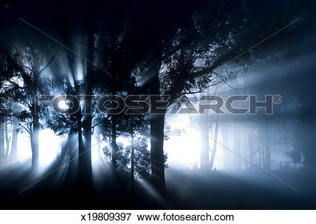 Picture of Shafts of sunlight shining through trees in woodland.