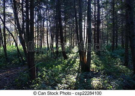 Stock Photography of Shafts of sunlight shining through trees in a.