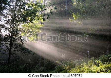 Stock Photo of Light shaft through trees csp1697074.