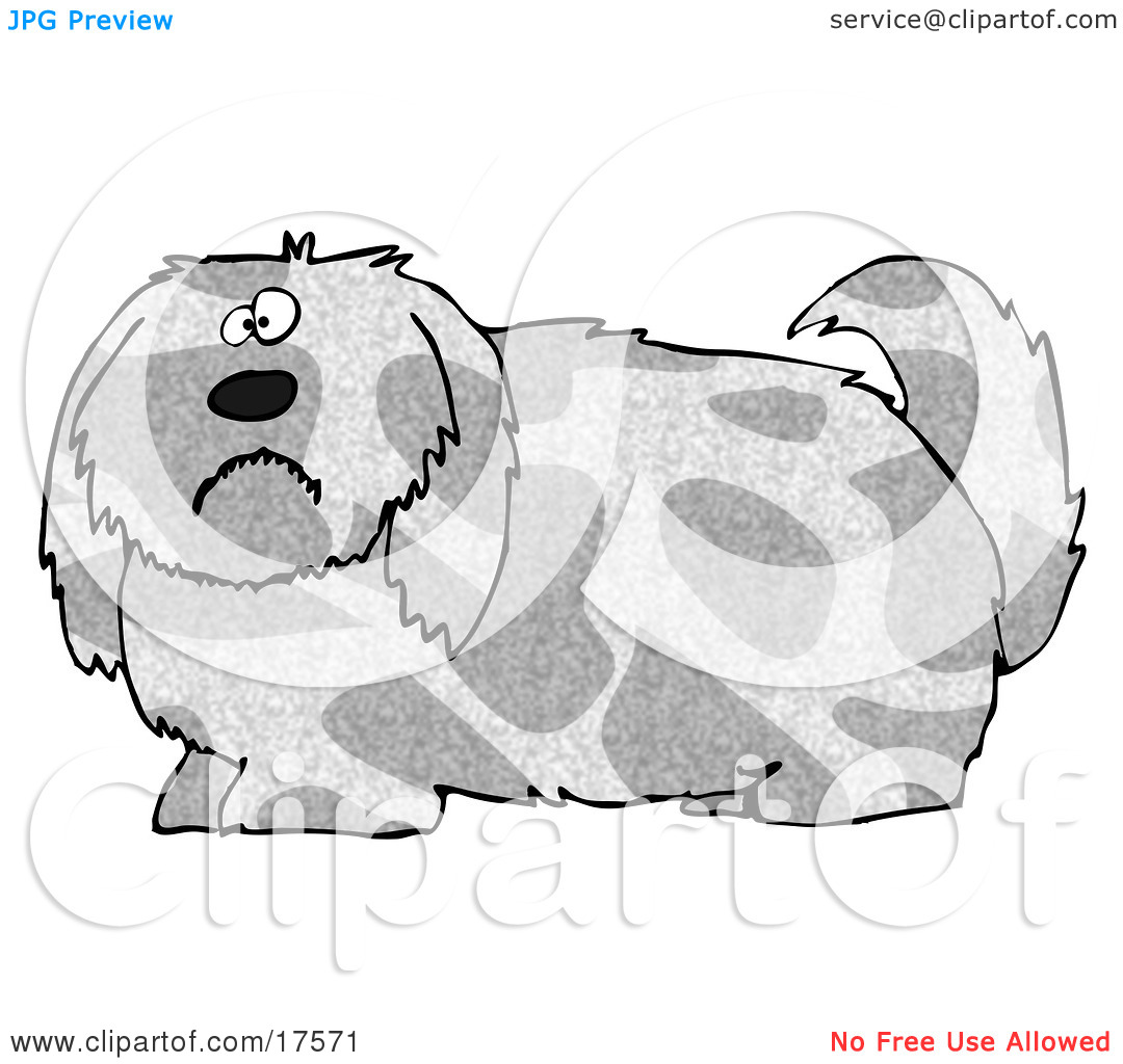 Clipart Illustration of a Spotted Gray And Tan Dog With Long.
