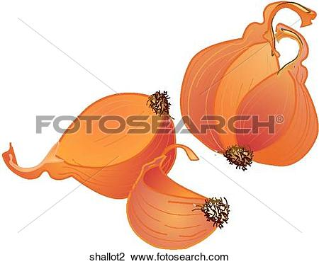 Shallot Stock Illustrations. 79 shallot clip art images and.